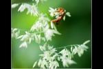 site_insect-op-bloem-large-e49adda32b6568979c4ba727d8d5cfa3cd590959