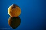 birdie-bird-703f25720cb7c13ea93244672091f6dab9499892