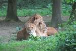 dieren-in-het-wild-87554776f17e97e3caaa16c745e1e0c5d187ef00